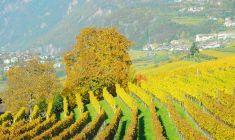 Weinanlage_suedtirol_Weinstrasse